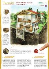 Termiti_in_casa