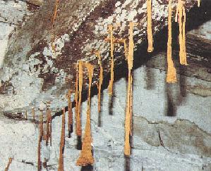 termiti tuboli