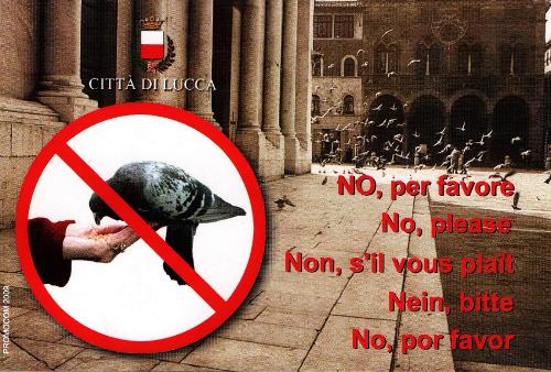la cartolina anti-piccioni
