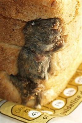 contaminazione degli alimenti