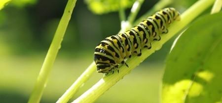 Proteggiamoli:evitiamo l'uso di insetticidi ad ampio spettro