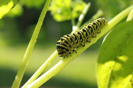 evitiamo l'uso di insetticidi