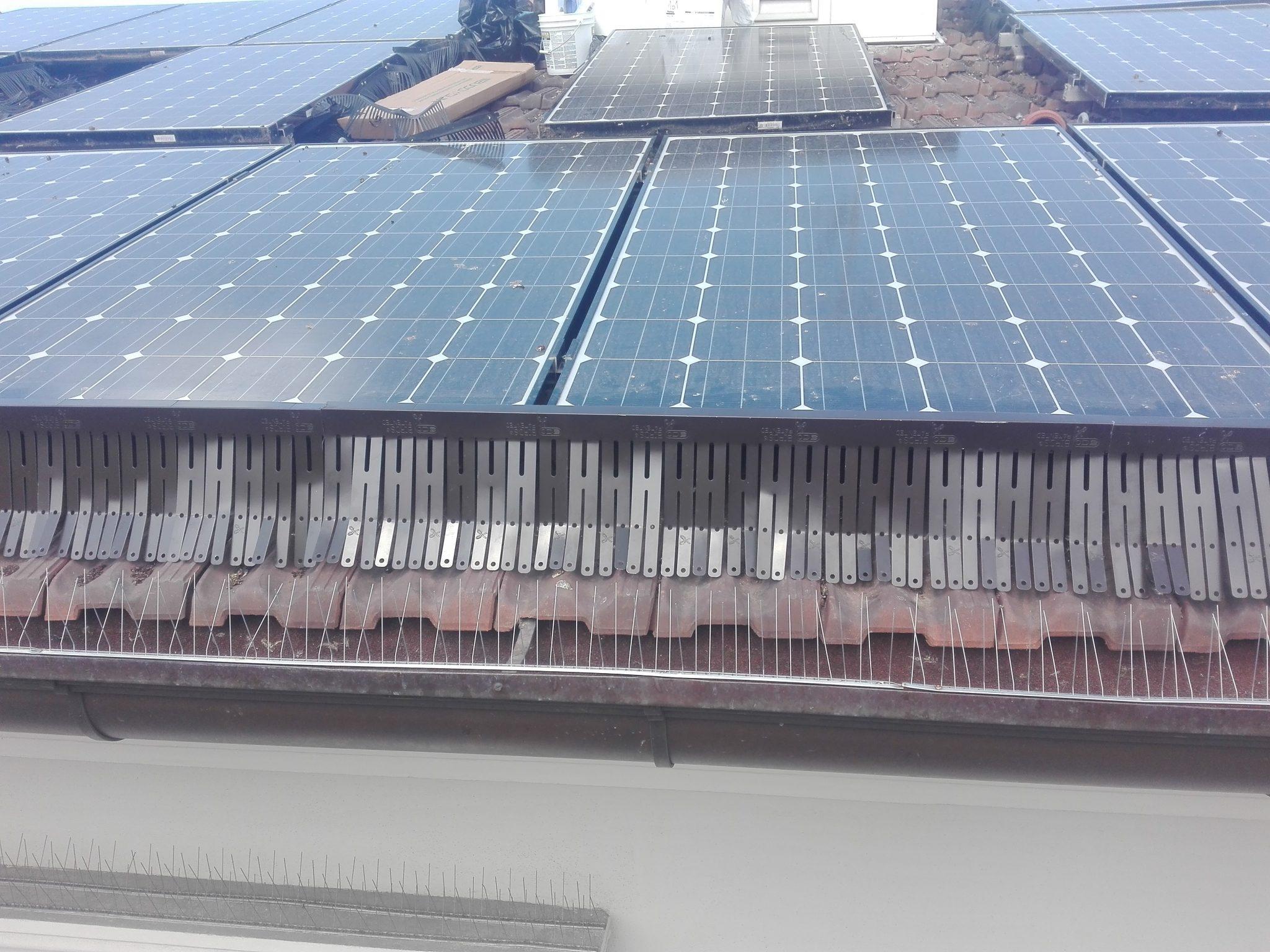 Scaccia piccioni per pannelli solari - Romani Disinfestazioni Srl