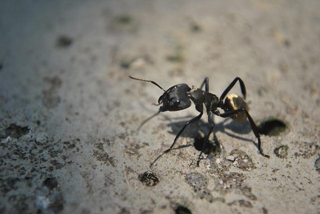 ant-196814_640