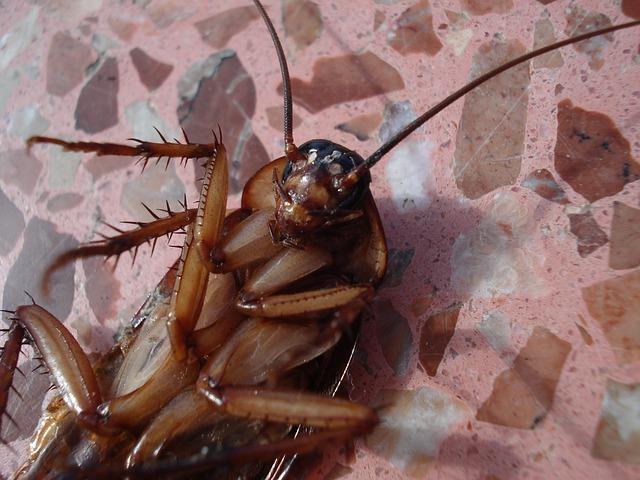 cockroach-15093_640