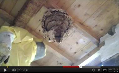 nido calabroni