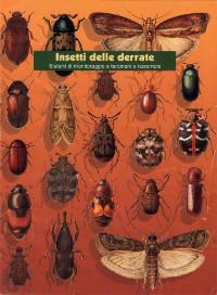 insetti cibo